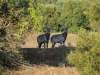 Crocuta Game Lodge - Out And About - 33 - waterbuck