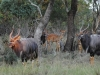 Crocuta Game Lodge - Slide Show - 2 - nyala